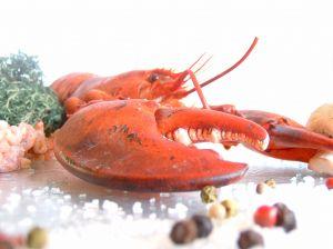 lobster-594338-m